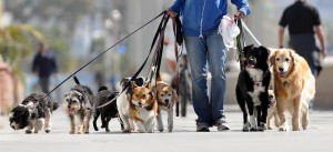 passeio_com_cachorro
